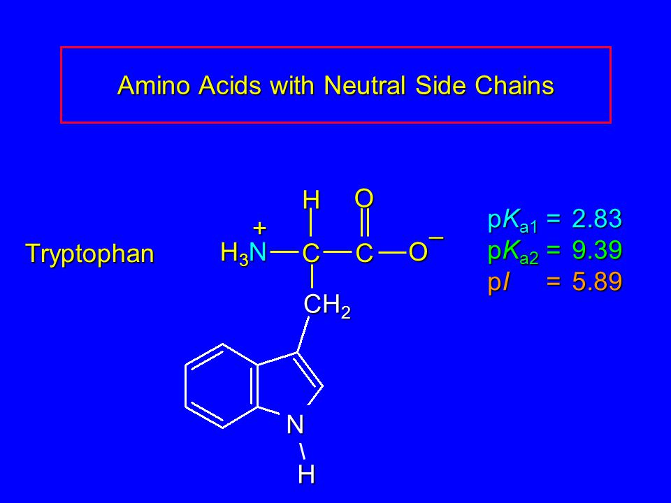 Amino Acids with Neutral Side Chains Tryptophan pK a1 = 2.83 pK a2 =9.39 pI =5.89 H3NH3NH3NH3N CCOO – H + CH 2 H N