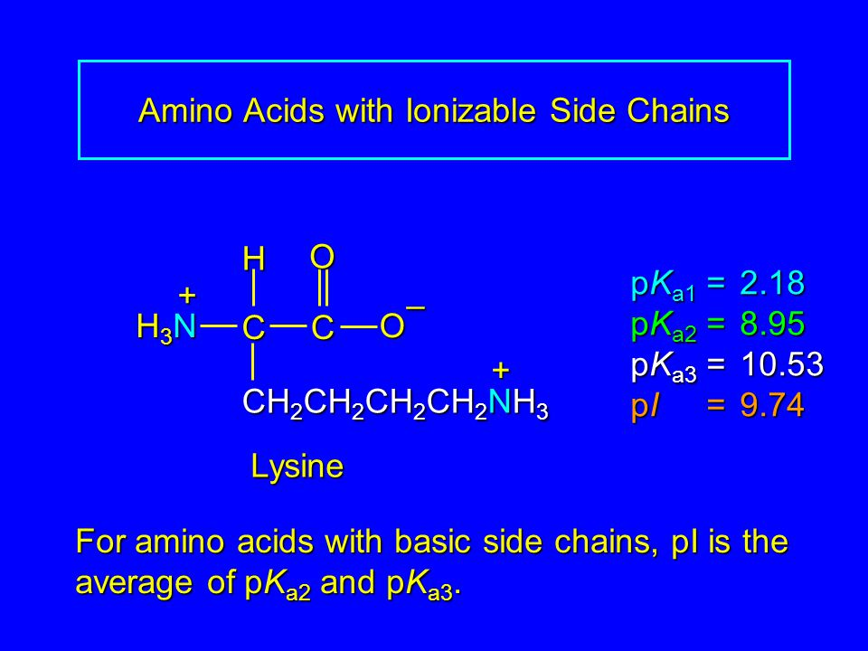 Amino Acids with Ionizable Side Chains Lysine pK a1 = 2.18 pK a2 =8.95 pK a3 =10.53 pI =9.74 H3NH3NH3NH3N CCOO – H + CH 2 CH 2 CH 2 CH 2 NH 3 + For am