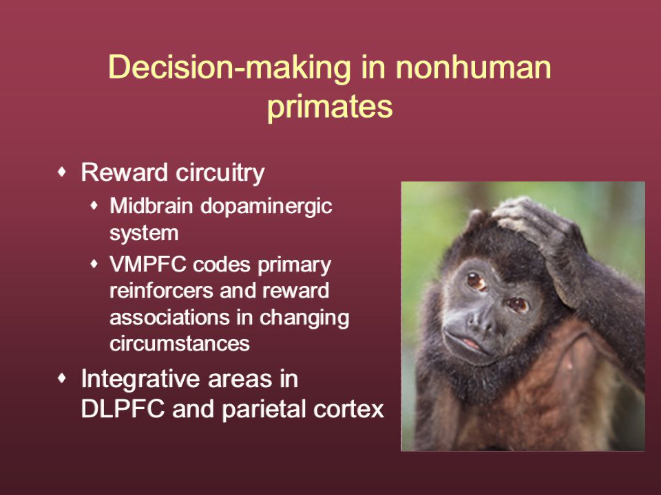 Decision-making in nonhuman primates  Reward circuitry  Midbrain dopaminergic system  VMPFC codes primary reinforcers and reward associations in changing circumstances  Integrative areas in DLPFC and parietal cortex  Reward circuitry  Midbrain dopaminergic system  VMPFC codes primary reinforcers and reward associations in changing circumstances  Integrative areas in DLPFC and parietal cortex