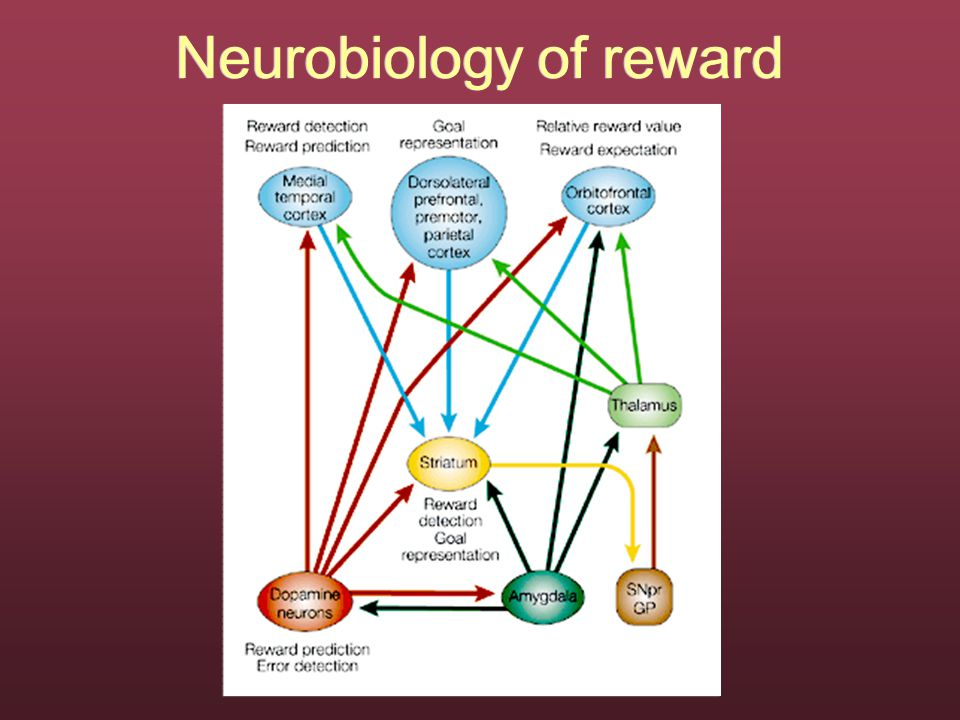 Neurobiology of reward