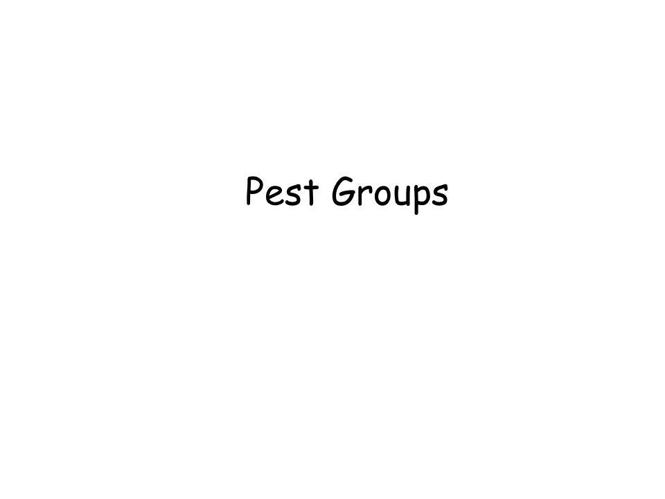 Pest Groups