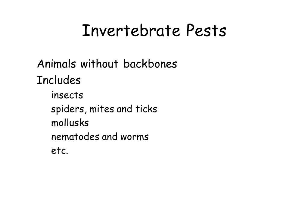 Invertebrate Pests Animals without backbones Includes insects spiders, mites and ticks mollusks nematodes and worms etc.