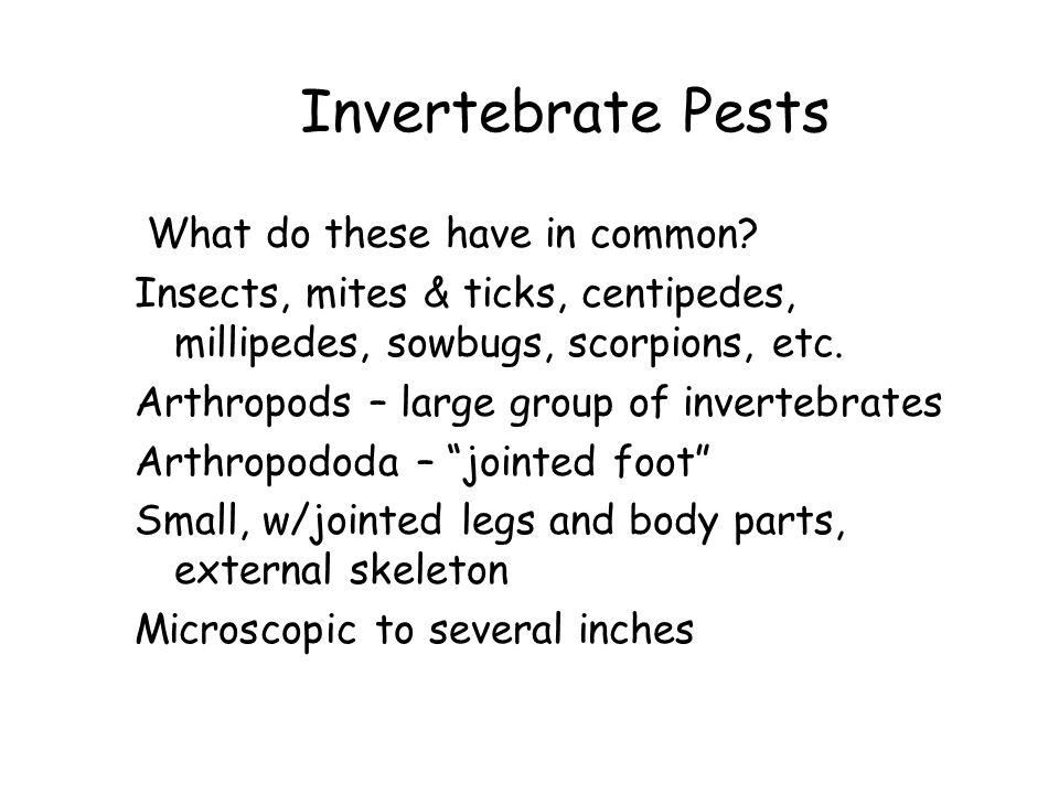 Invertebrate Pests What do these have in common? Insects, mites & ticks, centipedes, millipedes, sowbugs, scorpions, etc. Arthropods – large group of