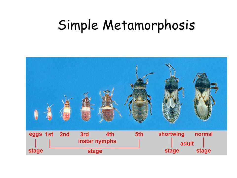 Simple Metamorphosis