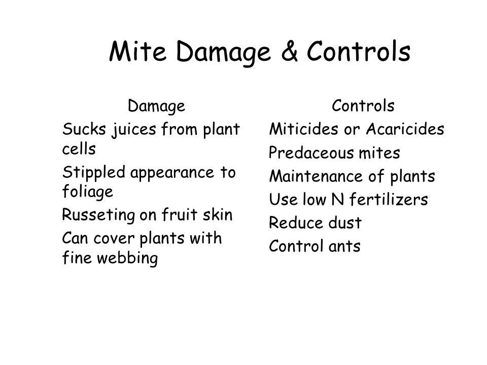 Mite Damage & Controls Damage Sucks juices from plant cells Stippled appearance to foliage Russeting on fruit skin Can cover plants with fine webbing
