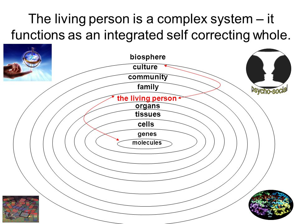 biosphere family community culture the living person The living person is a complex system – it functions as an integrated self correcting whole.
