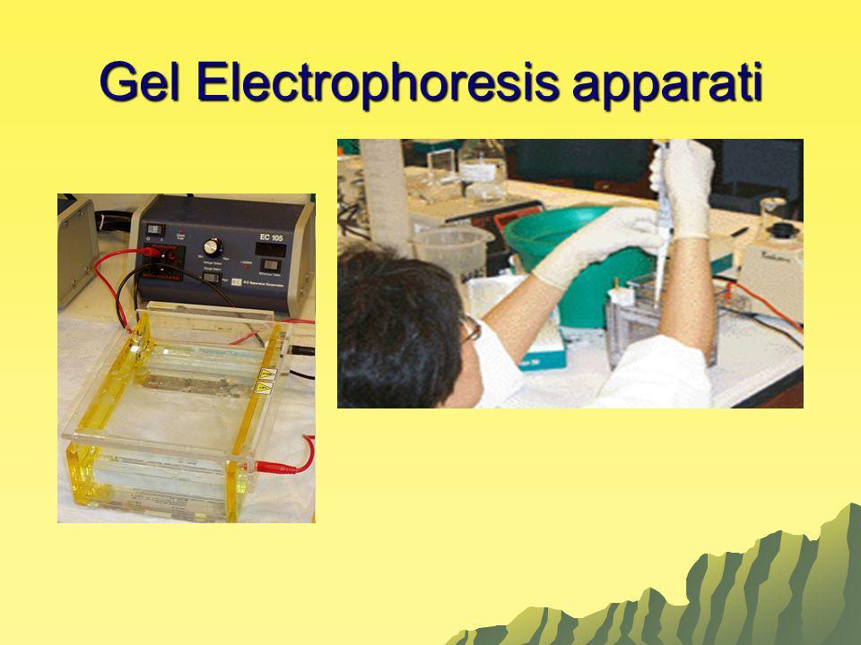 Gel Electrophoresis apparati