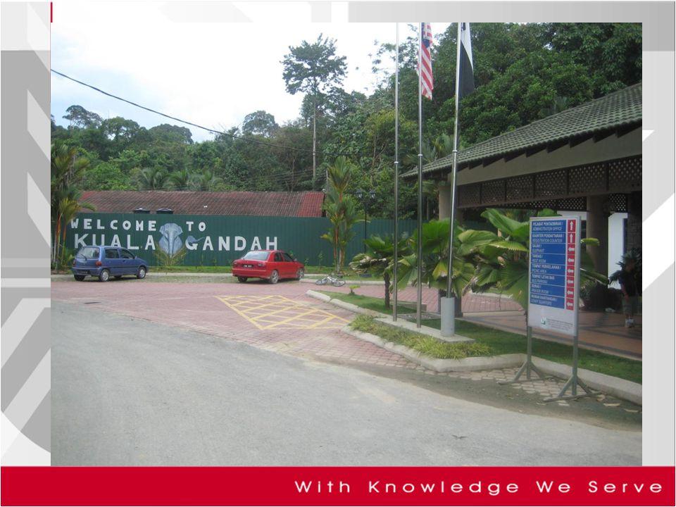 THE SURVEY A survey of 401 visitors  2008 at Kuala Gandah Elephant Management Centre, Pahang.