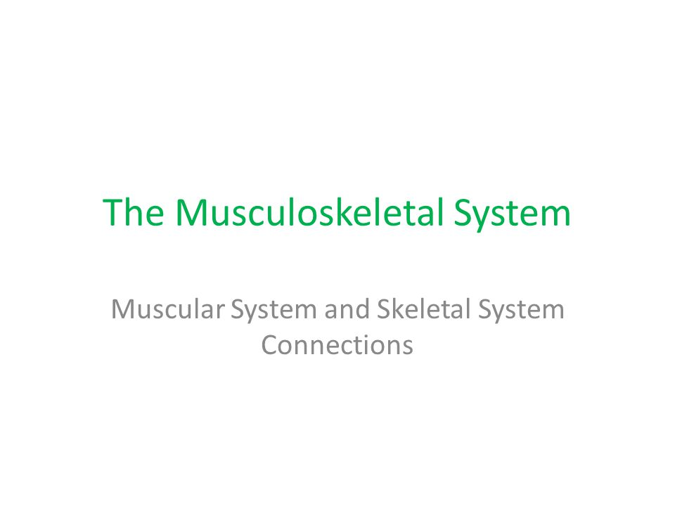 The Musculoskeletal System Muscular System and Skeletal System Connections