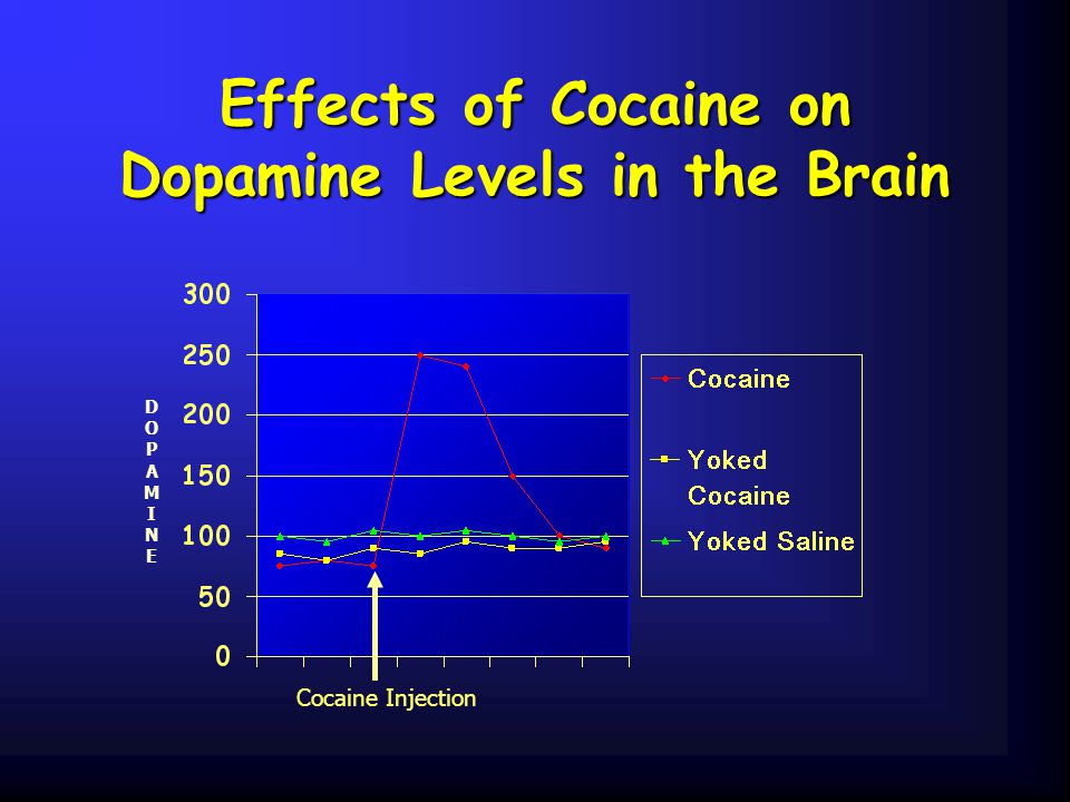 Effects of Cocaine on Dopamine Levels in the Brain DOPAMINEDOPAMINE Cocaine Injection