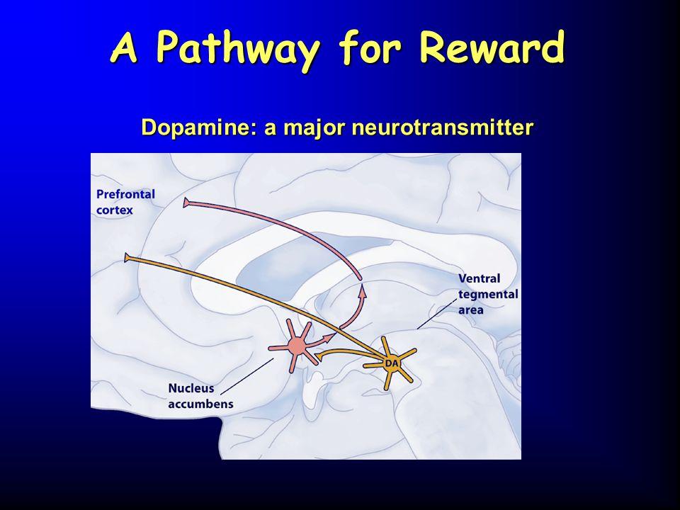 A Pathway for Reward Dopamine: a major neurotransmitter