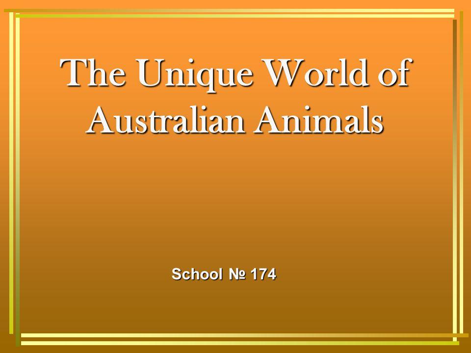 The Unique World of Australian Animals School № 174