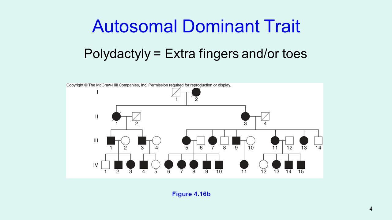 5 Autosomal Recessive Trait Albinism = Deficiency in melanin production Figure 4.17