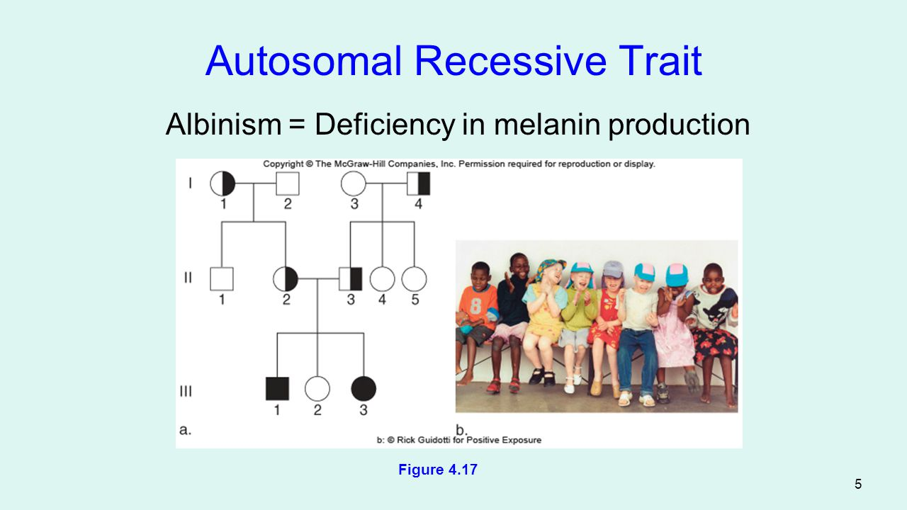 6 An Inconclusive Pedigree This pedigree can account for either an autosomal dominant or an autosomal recessive trait Figure 4.18