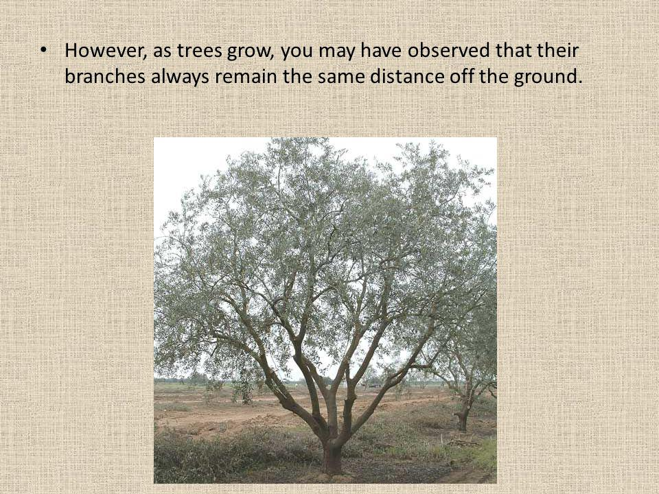 This observation tells you something about how trees grow.