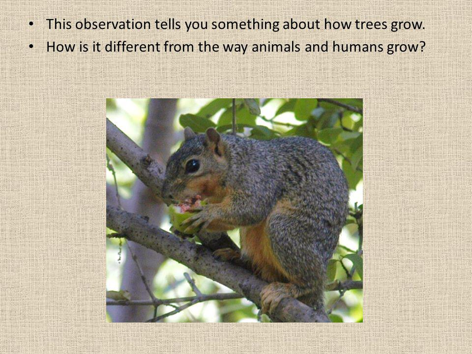 This observation tells you something about how trees grow. How is it different from the way animals and humans grow?