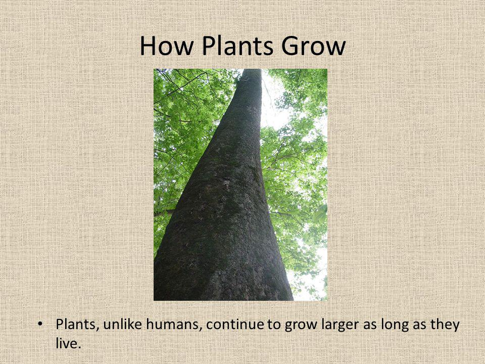 In plants, growth occurs at special growth tissue sites.