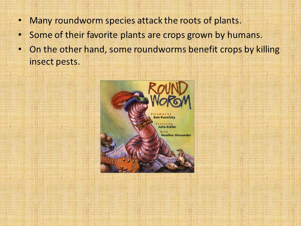 Many roundworm species attack the roots of plants.