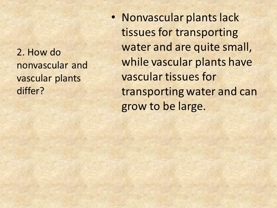 Nonvascular plants lack tissues for transporting water and are quite small, while vascular plants have vascular tissues for transporting water and can grow to be large.