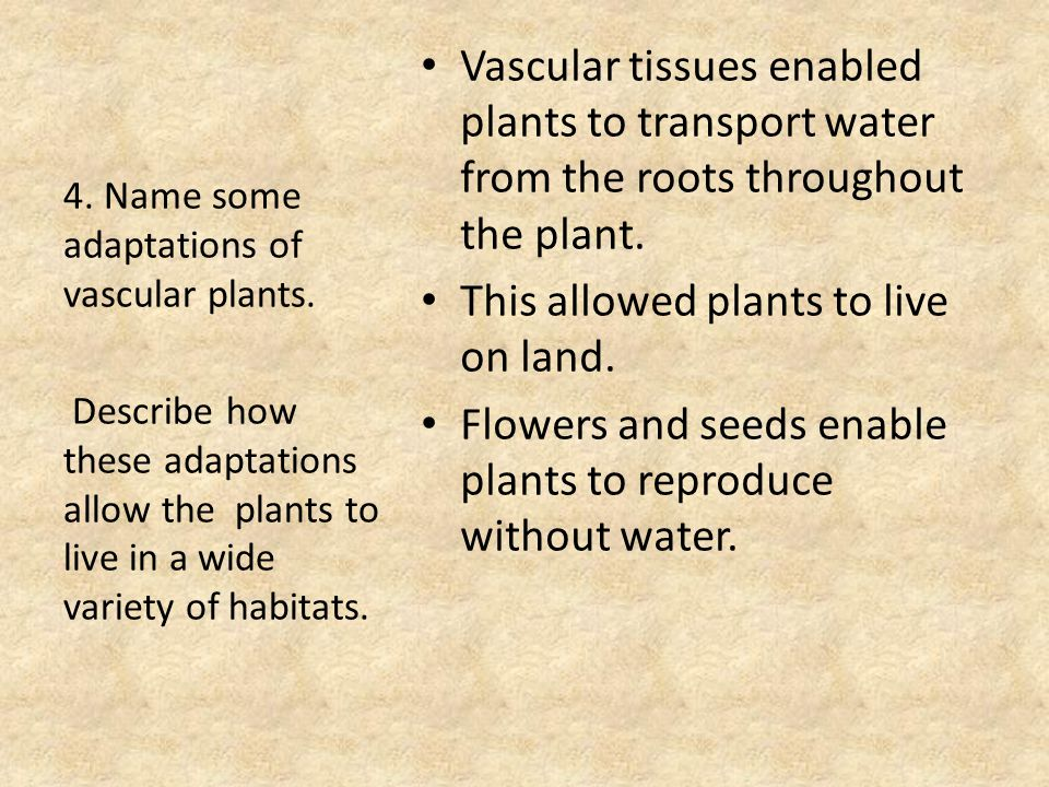 Vascular tissues enabled plants to transport water from the roots throughout the plant.