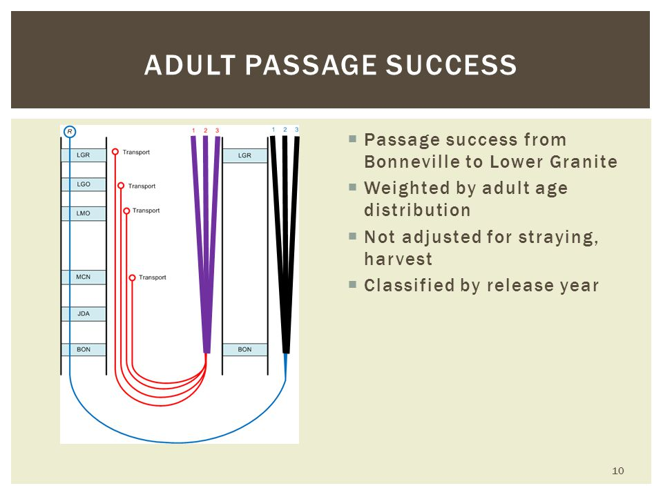  Passage success from Bonneville to Lower Granite  Weighted by adult age distribution  Not adjusted for straying, harvest  Classified by release year ADULT PASSAGE SUCCESS 10