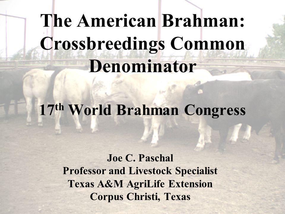 The American Brahman: Crossbreedings Common Denominator 17 th World Brahman Congress Joe C.