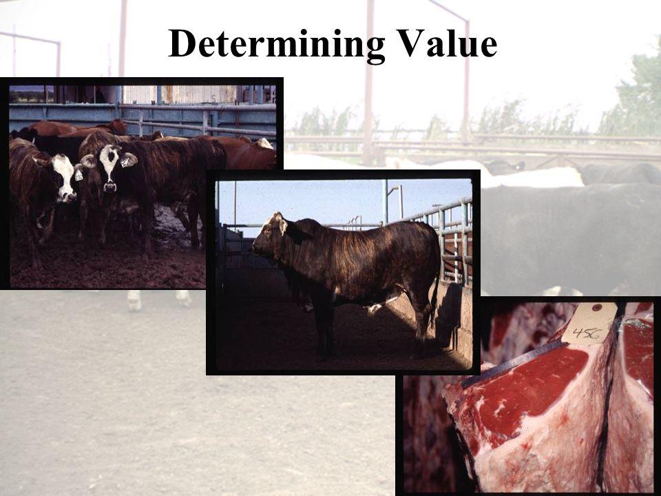 Determining Value