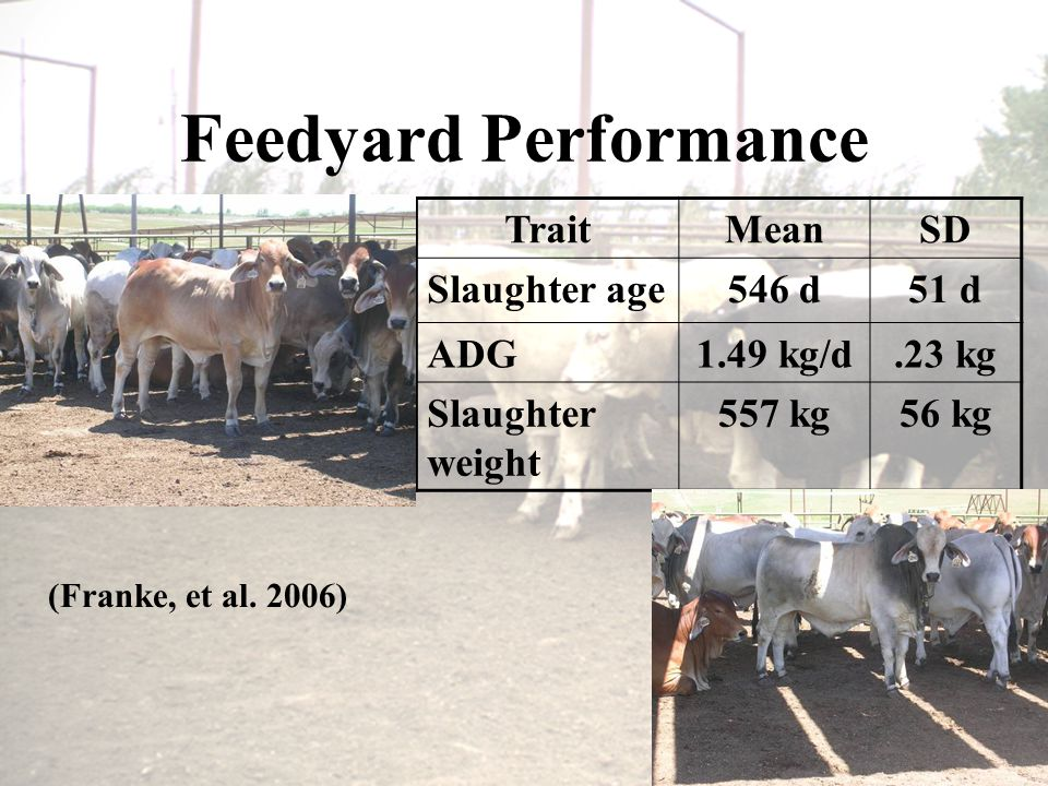 Feedyard Performance TraitMeanSD Slaughter age546 d51 d ADG1.49 kg/d.23 kg Slaughter weight 557 kg56 kg (Franke, et al.
