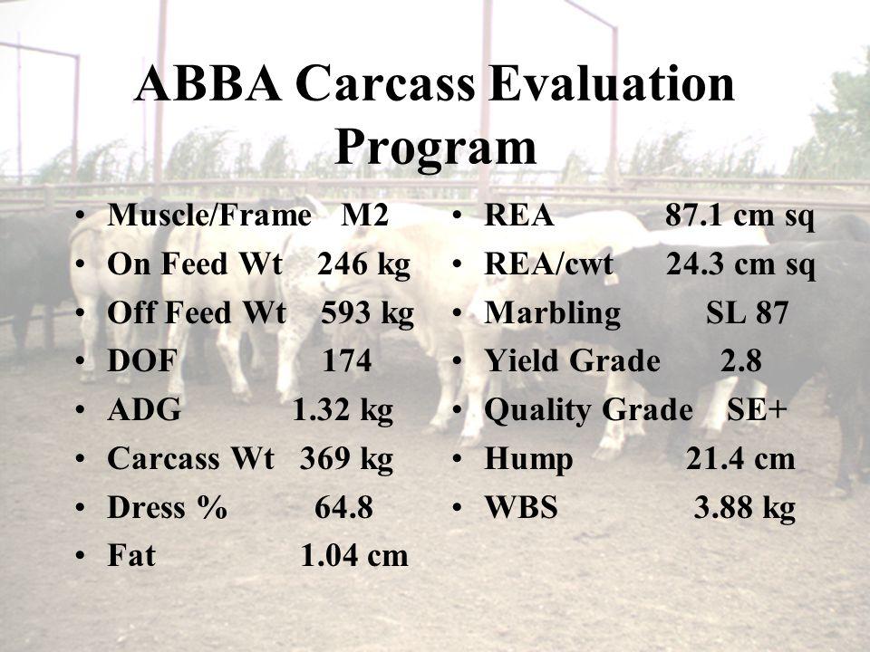 ABBA Carcass Evaluation Program Muscle/Frame M2 On Feed Wt 246 kg Off Feed Wt 593 kg DOF 174 ADG 1.32 kg Carcass Wt 369 kg Dress % 64.8 Fat 1.04 cm REA 87.1 cm sq REA/cwt 24.3 cm sq Marbling SL 87 Yield Grade 2.8 Quality Grade SE+ Hump 21.4 cm WBS 3.88 kg