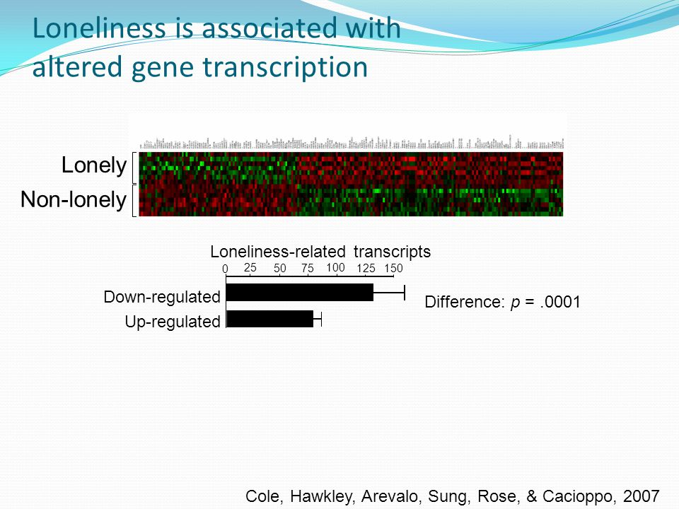 Lonely Non-lonely Difference: p =.0001 Up-regulated Loneliness-related transcripts 25 50 75 100 125 0 Down-regulated 150 Loneliness is associated with altered gene transcription Cole, Hawkley, Arevalo, Sung, Rose, & Cacioppo, 2007