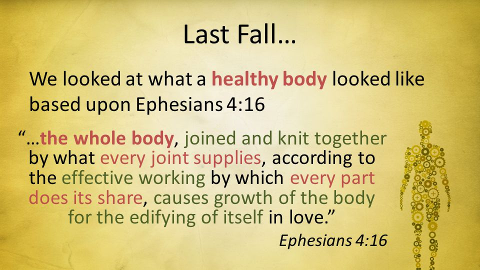 Last Fall… We looked at what a healthy body looked like based upon Ephesians 4:16 …the whole body, joined and knit together by what every joint supplies, according to the effective working by which every part does its share, causes growth of the body for the edifying of itself in love. Ephesians 4:16