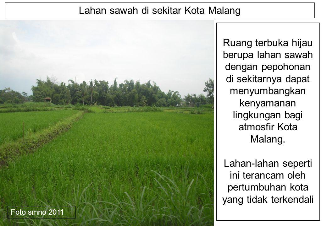 Lahan sawah di sekitar Kota Malang Ruang terbuka hijau berupa lahan sawah dengan pepohonan di sekitarnya dapat menyumbangkan kenyamanan lingkungan bagi atmosfir Kota Malang.