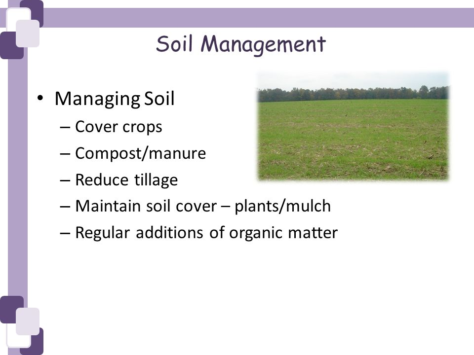 Soil Management Managing Soil – Cover crops – Compost/manure – Reduce tillage – Maintain soil cover – plants/mulch – Regular additions of organic matter