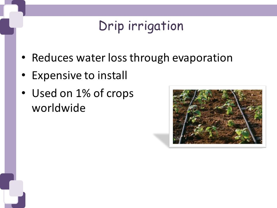 Drip irrigation Reduces water loss through evaporation Expensive to install Used on 1% of crops worldwide