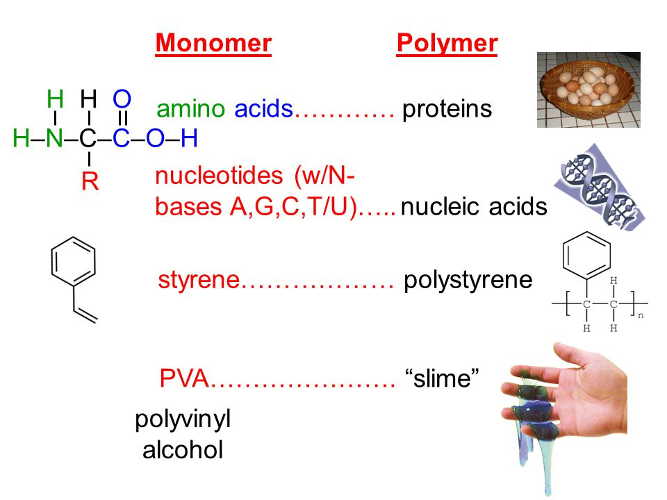 "MonomerPolymer amino acids………… nucleotides (w/N- bases A,G,C,T/U)….. styrene……………… PVA…………………. proteins nucleic acids polystyrene ""slime"" polyvinyl al"