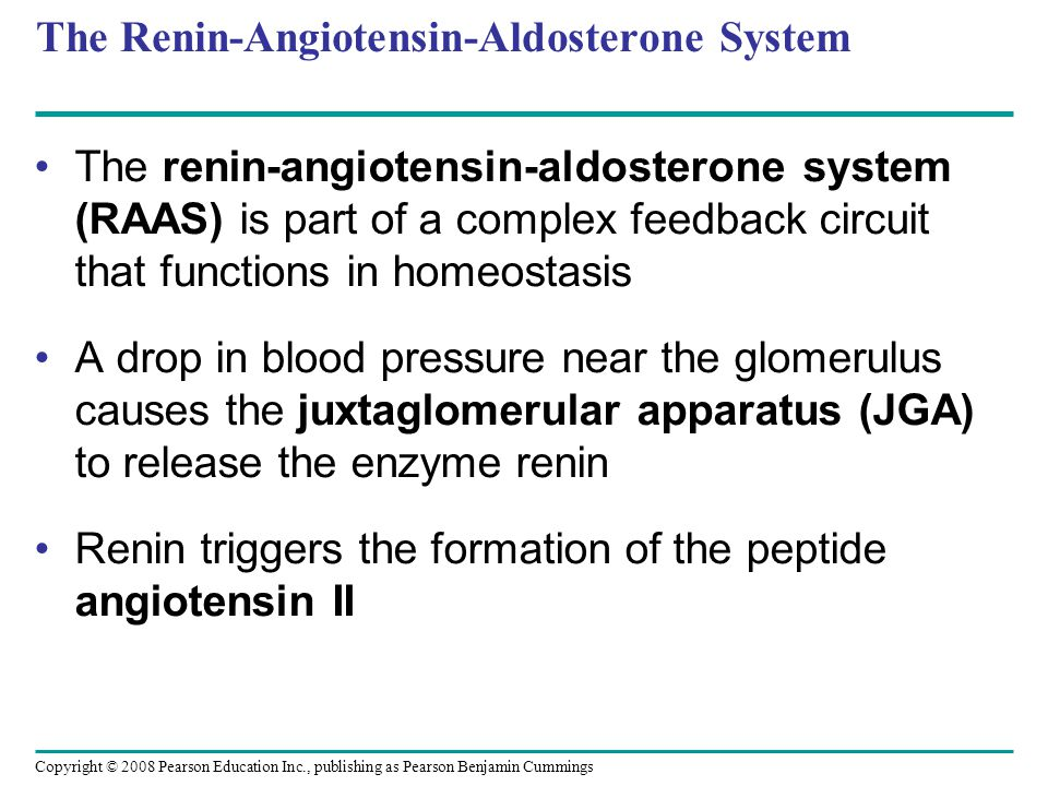Copyright © 2008 Pearson Education Inc., publishing as Pearson Benjamin Cummings The Renin-Angiotensin-Aldosterone System The renin-angiotensin-aldosterone system (RAAS) is part of a complex feedback circuit that functions in homeostasis A drop in blood pressure near the glomerulus causes the juxtaglomerular apparatus (JGA) to release the enzyme renin Renin triggers the formation of the peptide angiotensin II