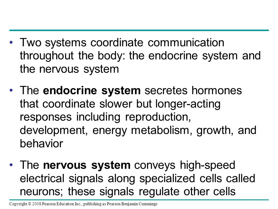 Copyright © 2008 Pearson Education Inc., publishing as Pearson Benjamin Cummings Two systems coordinate communication throughout the body: the endocrine system and the nervous system The endocrine system secretes hormones that coordinate slower but longer-acting responses including reproduction, development, energy metabolism, growth, and behavior The nervous system conveys high-speed electrical signals along specialized cells called neurons; these signals regulate other cells