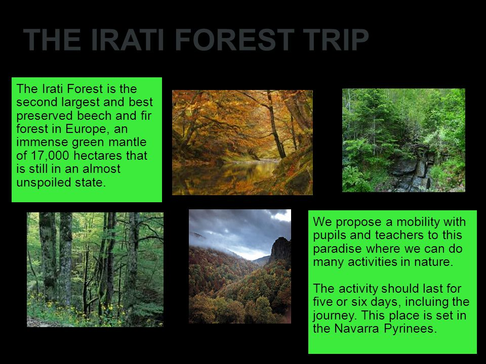 THE IRATI FOREST TRIP The Irati Forest is the second largest and best preserved beech and fir forest in Europe, an immense green mantle of 17,000 hectares that is still in an almost unspoiled state.