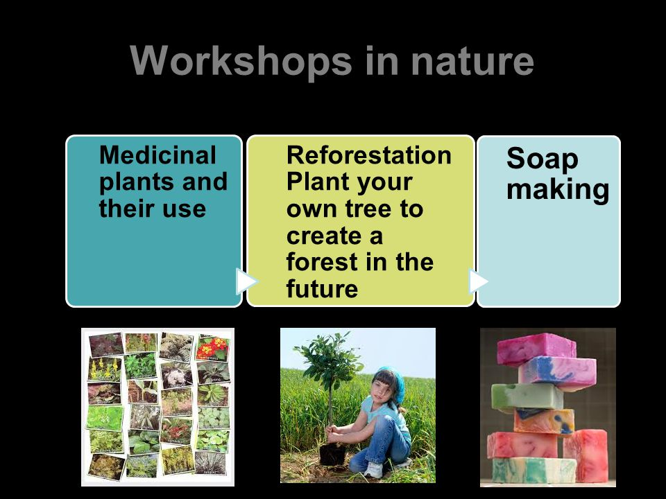 Workshops in nature Medicinal plants and their use Reforestation Plant your own tree to create a forest in the future Soap making
