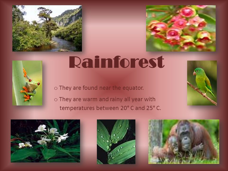 Rainforest o They are found near the equator. o They are warm and rainy all year with temperatures between 20° C and 25° C.
