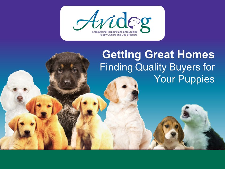 2014AvidogInternationalLLC 2014 Avidog International LLC © Breeding Success is Not Just in the Rearing, It's in Your Placements Where will your pups do best?