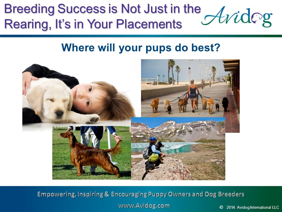 2014AvidogInternationalLLC 2014 Avidog International LLC © Breeding Success is Not Just in the Rearing, It's in Your Placements Where will your pups do best