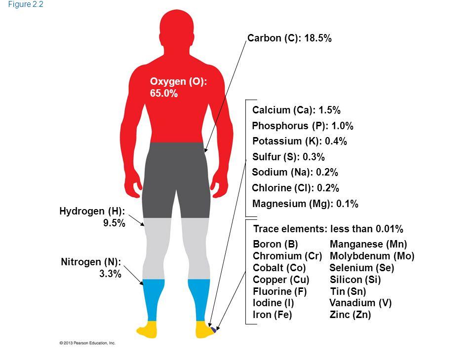 Figure 2.2 Oxygen (O): 65.0% Carbon (C): 18.5% Calcium (Ca): 1.5% Magnesium (Mg): 0.1% Chlorine (Cl): 0.2% Sodium (Na): 0.2% Sulfur (S): 0.3% Potassiu