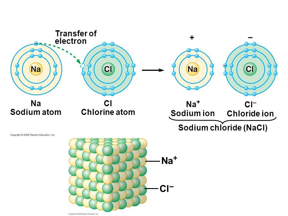 Na Sodium atom Transfer of electron Cl Chlorine atom Na + Sodium ion Cl – Chloride ion Sodium chloride (NaCl) + – Na + Cl –