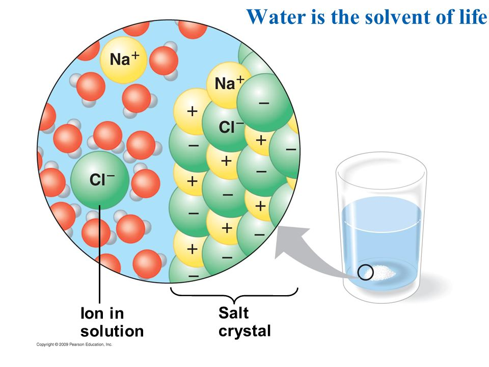 Ion in solution Salt crystal Water is the solvent of life