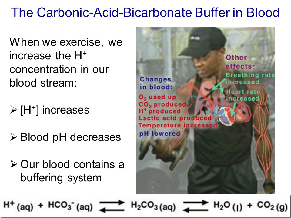 The Carbonic-Acid-Bicarbonate Buffer in Blood When we exercise, we increase the H + concentration in our blood stream:  [H + ] increases  Blood pH d