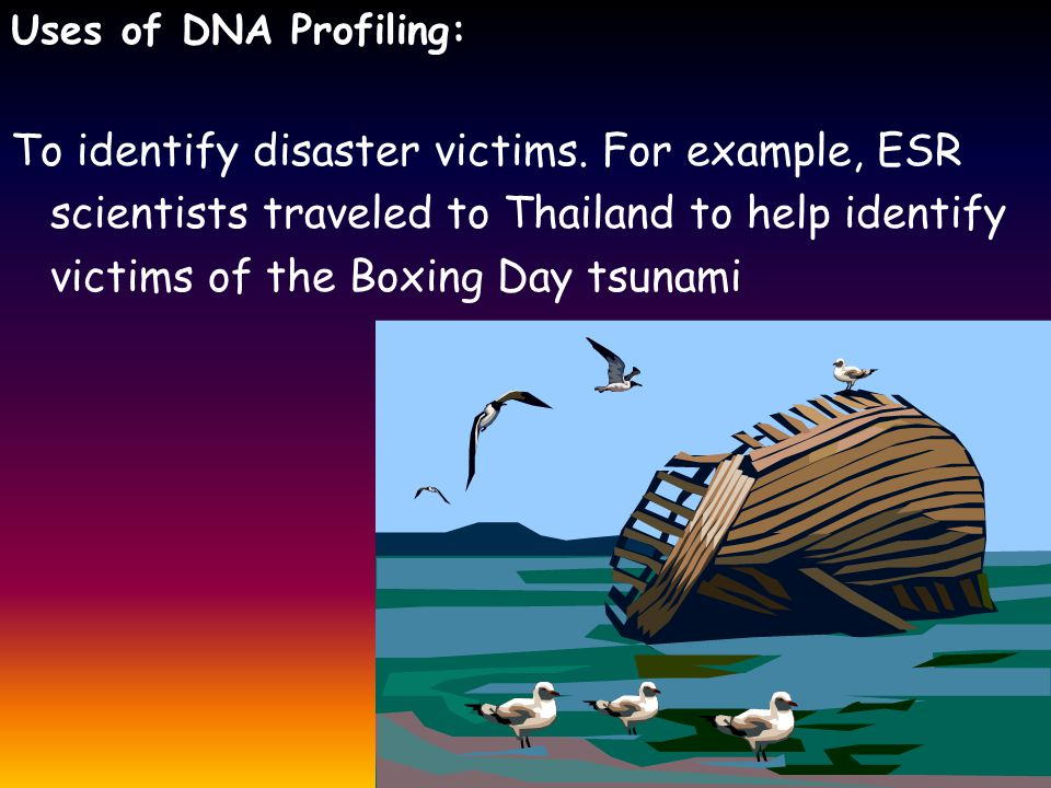 Uses of DNA Profiling: To identify disaster victims.