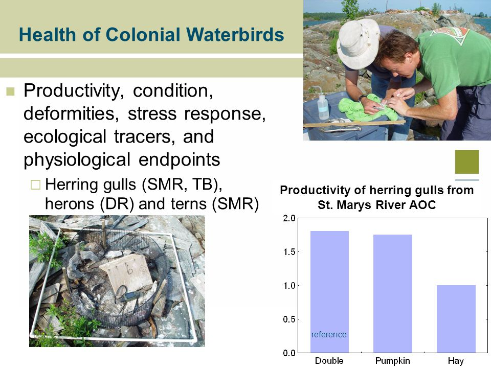 Productivity, condition, deformities, stress response, ecological tracers, and physiological endpoints  Herring gulls (SMR, TB), herons (DR) and terns (SMR) Health of Colonial Waterbirds Productivity of herring gulls from St.