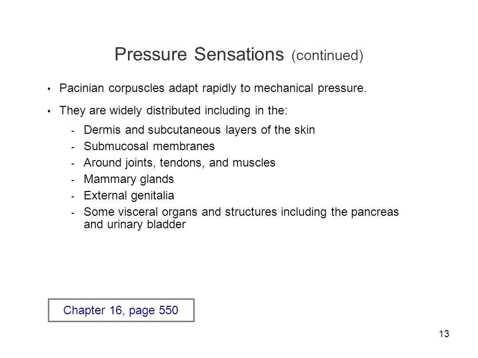 13 Pressure Sensations (continued) Pacinian corpuscles adapt rapidly to mechanical pressure.