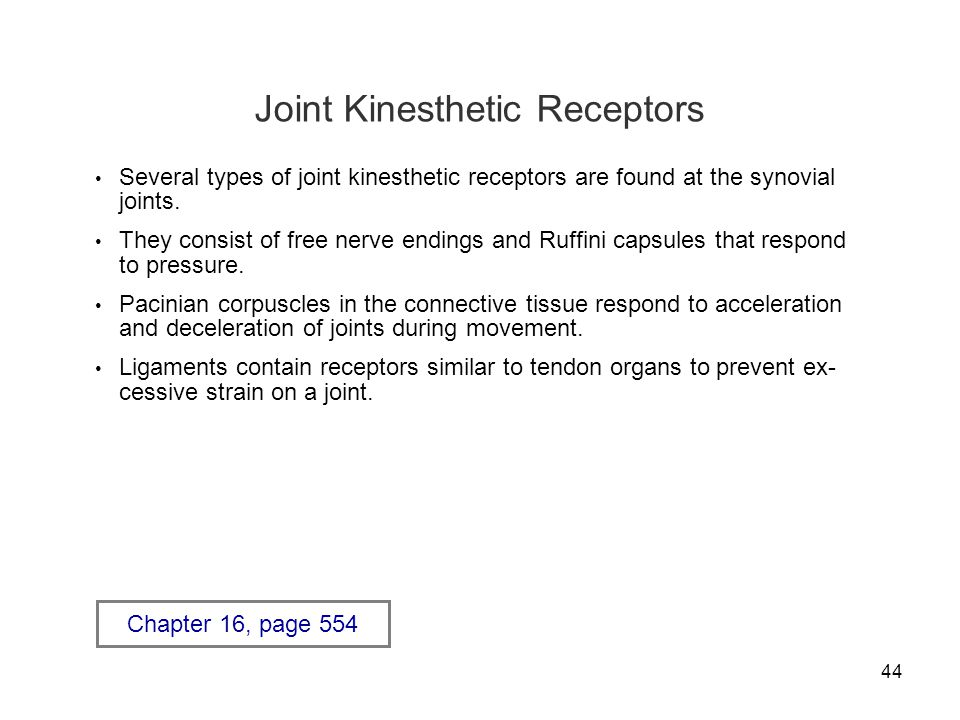 44 Joint Kinesthetic Receptors Several types of joint kinesthetic receptors are found at the synovial joints.